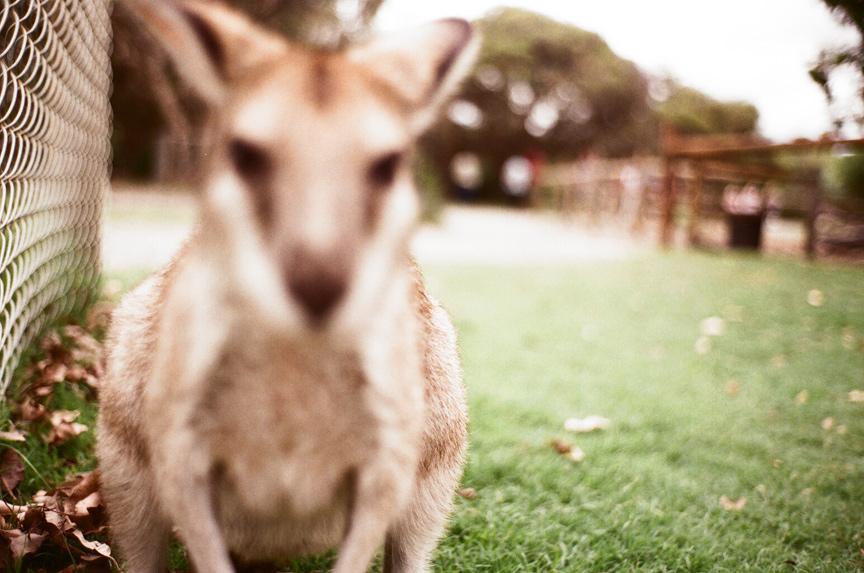 Summer in Australia 2007